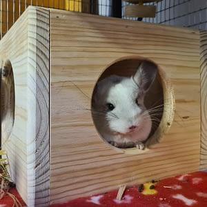Chinchilla Nesting Box