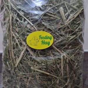 Chinchilla Hay