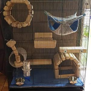Basic Chinchilla Cage