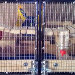 Special Chinchilla Cages